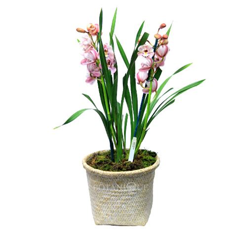 orchid delivery orchid plant delivery gold coast botanique flowers by