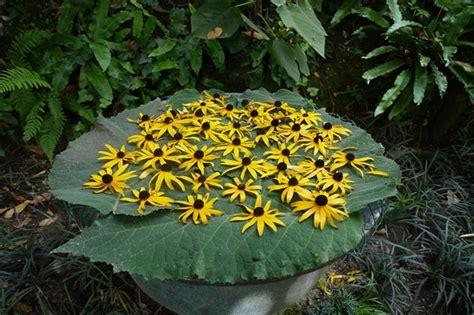 giardino botanico hruska giardino botanico hruska 3 garden tour