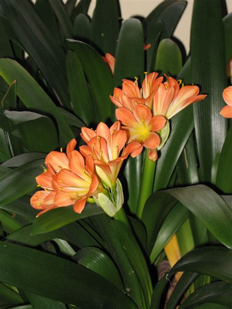 Cool Flowering Houseplants For Winter Uconnladybug S Blog