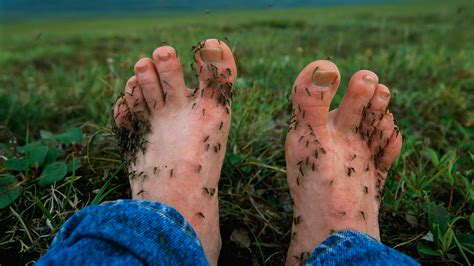 Researchers Have Determined Why Mosquitoes Find Ankles And | researchers have determined why mosquitoes find ankles and