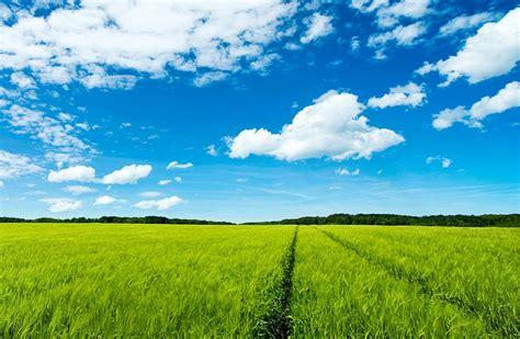 download wallpaper awan hd gambar pemandangan sawah dengan langit biru pernik dunia