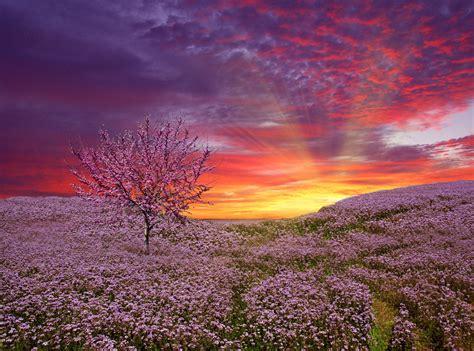 fields of love amazing beautiful clouds field fields