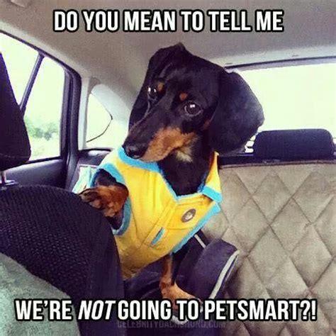 1000+ ideas about Dachshund Meme on Pinterest | Funny ...