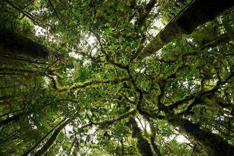 The Canopy Rainforest Canopy