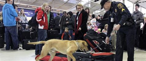 bomb dogs sniffing out better bomb detection berkeley researchers tiny lasers could replace