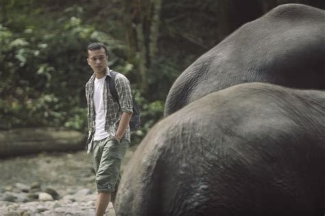 film dokumenter gajah dibintangi nicholas saputra film save out forest giants