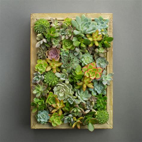 living picture easy diy succulent living picture frame kit juicykits com