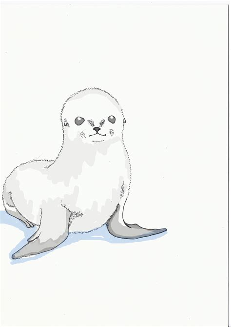 free coloring pages of cute seal