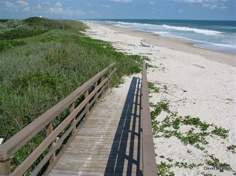 canaveral beaches canaveral national seashore www pixshark images