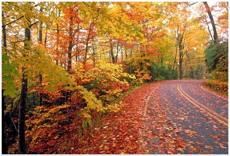 Why Do Trees Shed Their Leaves In Autumn by Why Do Trees Drop Their Leaves In The Autumn Fall The