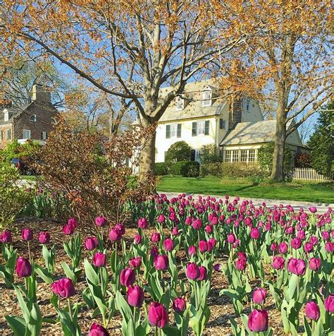 1000 ideas about tulips garden on container flowers bulb flowers and planting
