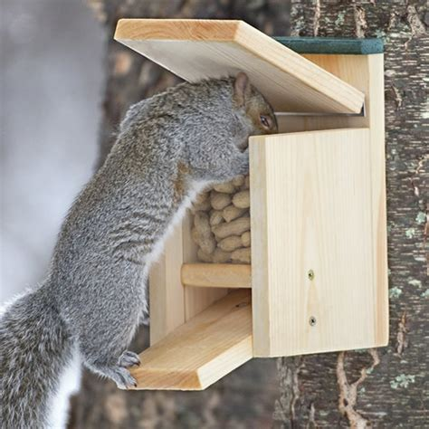 squirrel houses for sale duncraft com duncraft jack in the box squirrel feeder