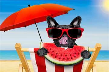 can dogs eat watermelon rind what to do when your feels scared