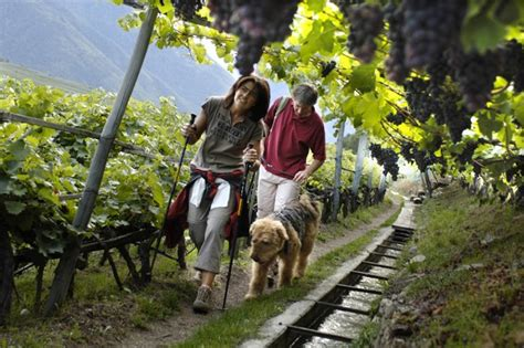grapes poisonous to dogs five foods your should avoid dogtime