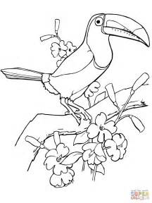 Toucan Coloring Page keel billed toucan coloring page free printable coloring