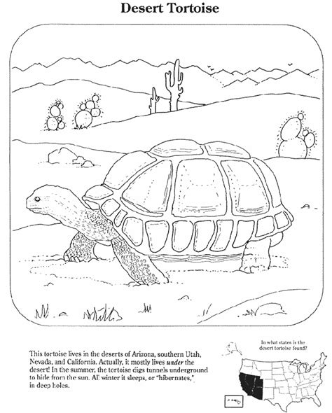 desert turtle coloring page wucuh