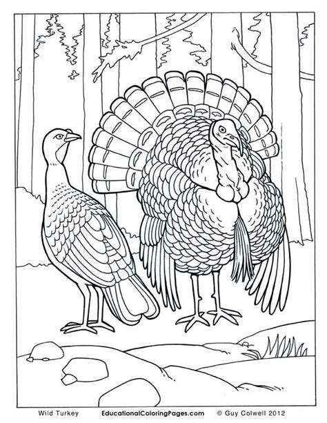 coloring pages birds realistic realistic birds az coloring pages
