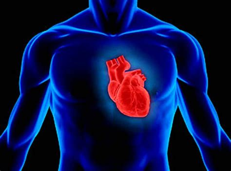 the heart is a the nature and care of the human heart thisdaylive