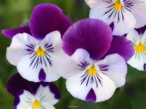 Beautiful Flower Images by Top 10 Beautiful Flowers