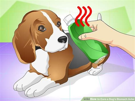 stomach turning in dogs how to cure a s stomach ache with pictures wikihow