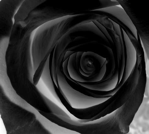 Black Rose By Superheroesdeath On Deviantart Black Roses For