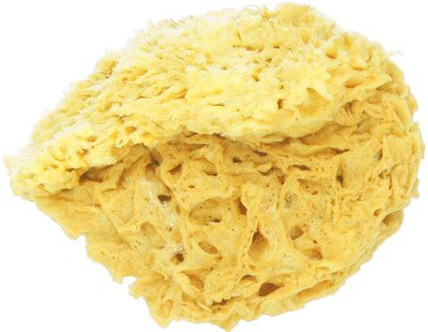 sea sponge on natural hair natural honeycomb sponge ecco verde online shop
