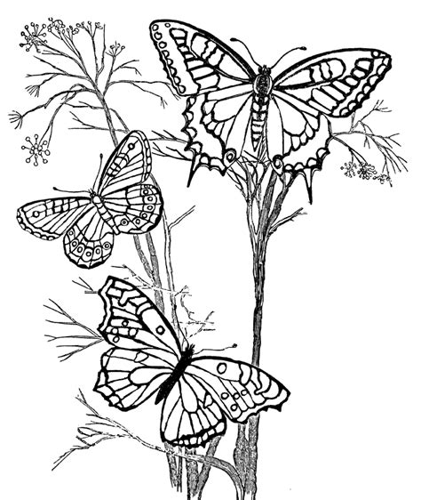 butterfly coloring pages for adults coloring pages flowers butterflies coloring home