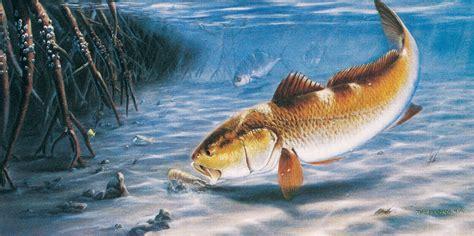 fishing background bass fishing wallpaper backgrounds 183