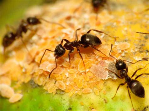 black ants how to get rid of black ants 10 best black ant killers