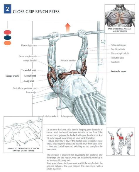 muscles used during bench press 25 best ideas about chest exercises for mass on pinterest chest workout for mass