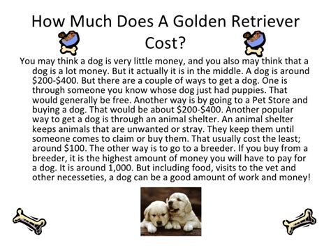 how much does golden retriever cost a golden retriever cost dogs in our photo