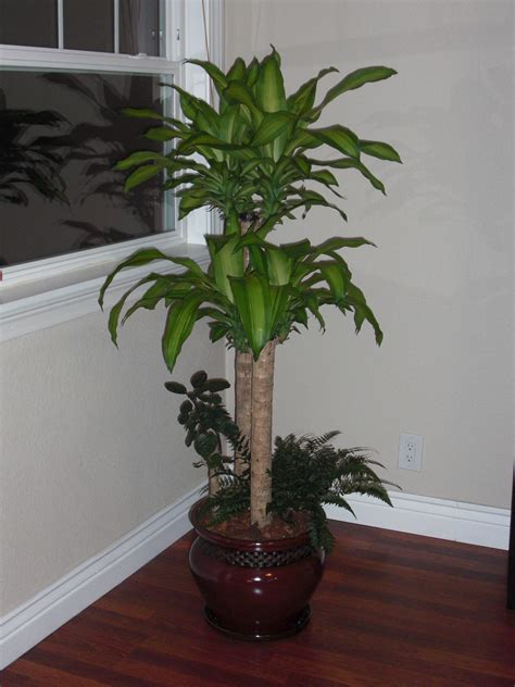 house plant design ideas large house plants low light