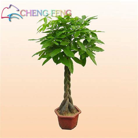 where can i buy a tree where to buy a cheap tree 28 images collections of