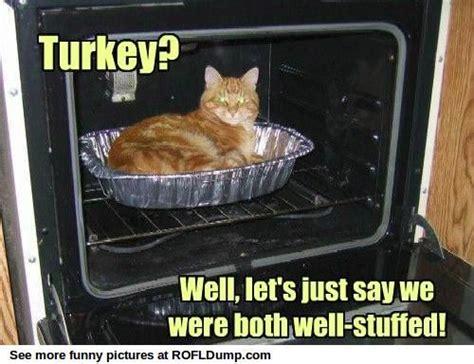 Thanksgiving Cat Meme - turkey meme funny lol cat critters talking shit