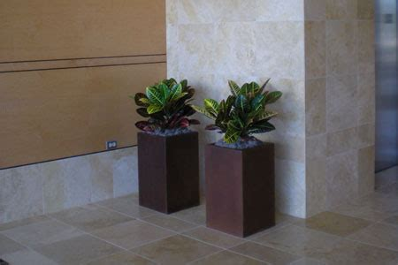 indoor plants gallery the potted plant scottsdale phoenix indoor plant landscaping gallery the potted plant