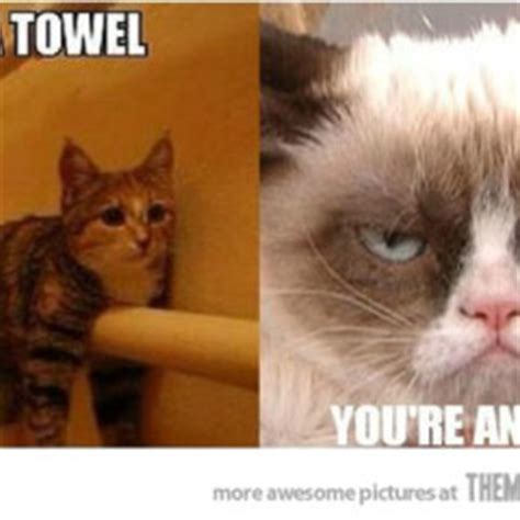 Towel Meme - february 2014 page 33 of 59 cat planet cat planet