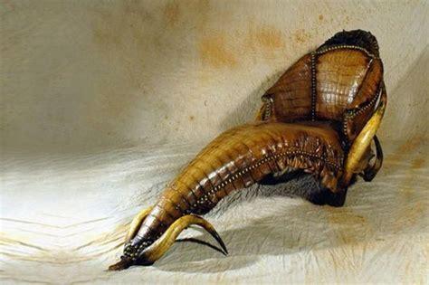 alligator skin couch strange african made furniture skins tusks horns