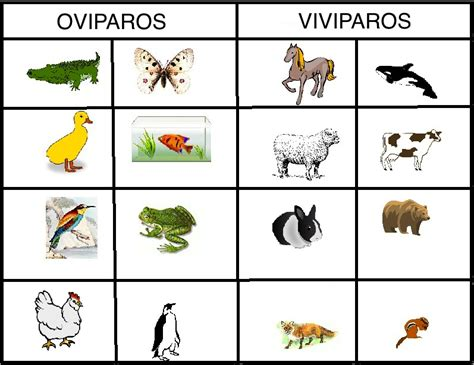 Early Learning Book Animal Dan Animal Planet Pets Activity Book animales oviporos