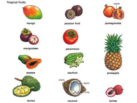 fruit definition tra từ coconut từ điển oxford advanced learner 8th