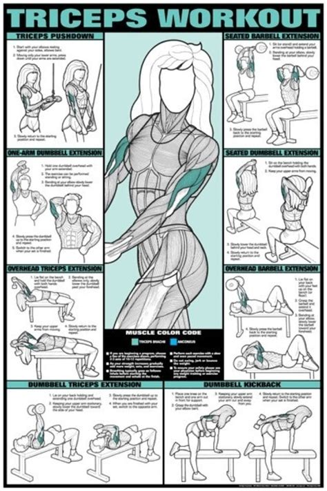 triceps workouts fitness and health charts