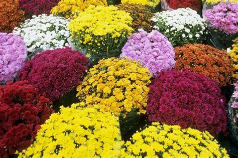 fiori cimitero comune di villacidro orario di apertura cimitero