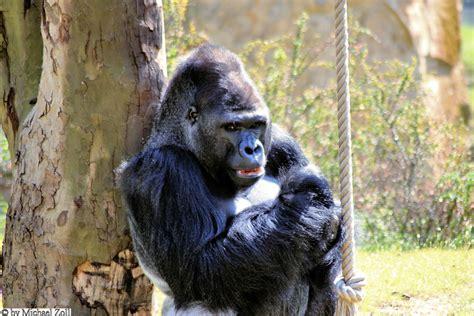 zoologischer garten öffnungszeiten zoo berlin berlin city west und umgebung
