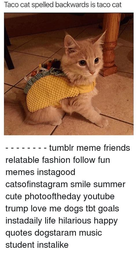 Cat Memes Tumblr - cat memes tumblr www imgkid com the image kid has it