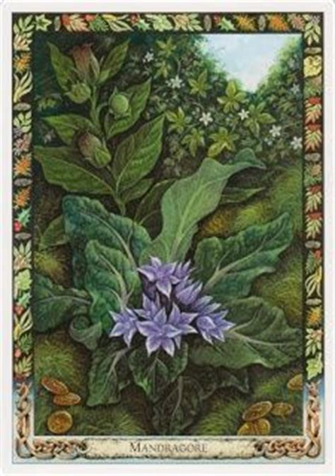 the druid plant oracle 1859064191 the druid plant oracle cards mandrake i like cards druid plant oracle