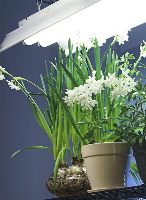 light requirements indoors fluorescent lighting