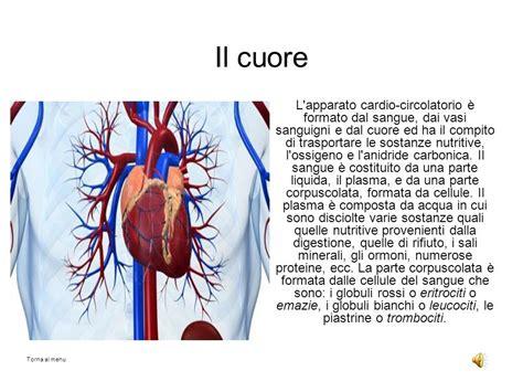 cuore e vasi il cuore mappa concettuale il cuore anatomia trapianto