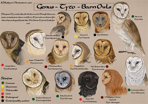 species chart owl facts top 10 facts about owls facts net