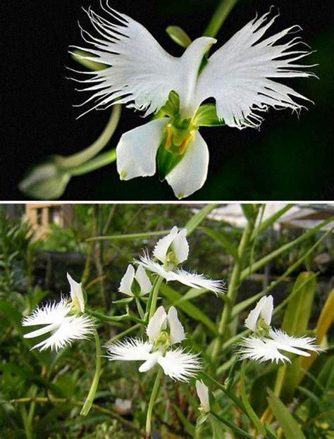 fiori rari amici in allegria fiori curiosi e rari