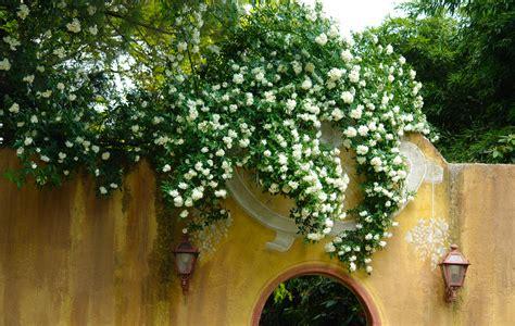 giardini paghera collezioni paghera mygarden by paghera