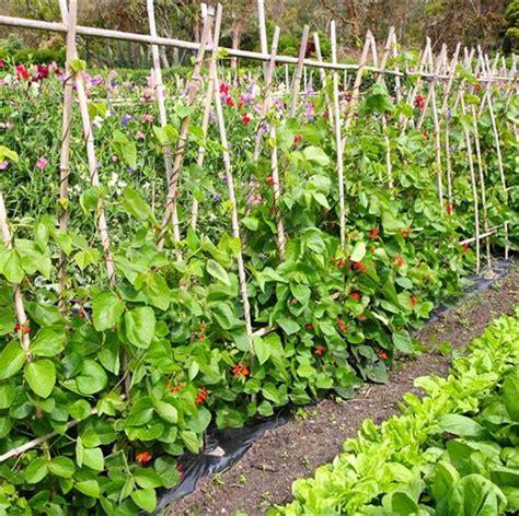 conseils pour un potager au jardin ferme de sainte marthe